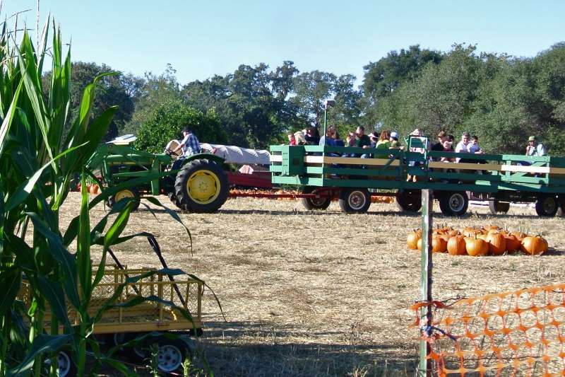 pumpkin farm, citrus heights