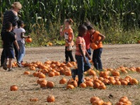 Children pick out a personal pumpkin while visiting the Pumpkin Farm in Citrus Heights, Thursday.