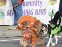 Several costume-wearing dogs walk past the parade judges' booth, during the 2015 Howl 'O Ween parade.
