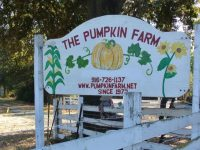 The Pumpkin Farm, located off Old Auburn Road in Citrus Heights, is open annually each October. // CH Sentinel