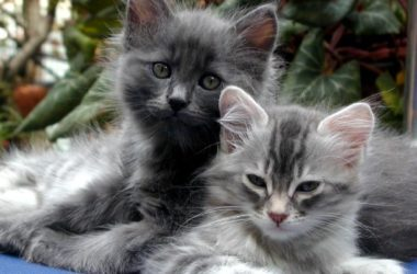 Cats, kittens