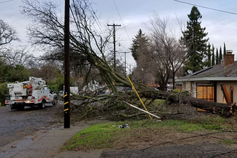 SMUD, downed tree, wires, power
